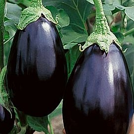 Eggplant, Black Beauty, Clean and Organically Grown (by the LB)