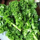 Kale - Organic by the bunch