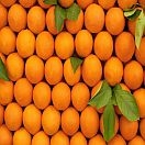 Oranges, Navel, Organic, individually priced