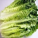 Romaine Lettuce Organic Grown individually priced