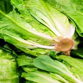 Lettuce, Romaine - Organic Grown individually priced